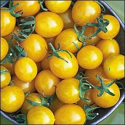 Blondkopfchen Tomato Seeds Yellow Cherry Knapp S Fresh
