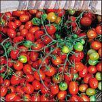 cherry roma